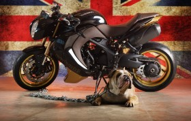 Vilner Custom Bike Bulldog (1)