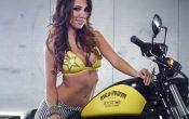 Rockstar Energy Harley-Davidson Girls-6